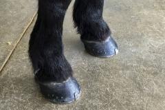 Bigboy Shoes
